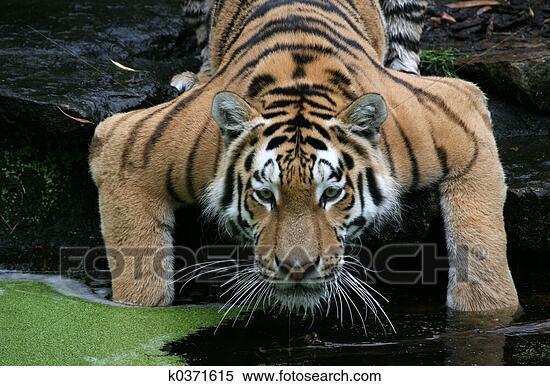 Le zoo du forum - Page 3 K0371615