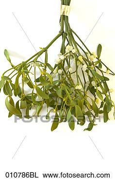 http://comps.fotosearch.com/comp/BLG/BLG001/szczelnie-do-gory-jemiola_~010786BL.jpg