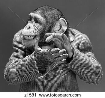 monkey-chimp-chimpanzee_~z1581.jpg