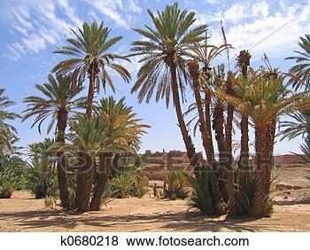 Stock Foto - wüste, oase, handfläche, tr. fotosearch - suche fotos fotografie und bilder
