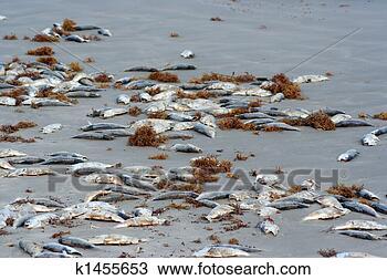 Banco de Imagem - morto, peixe,  praia. fotosearch  - busca de fotos,  imagens e clipart