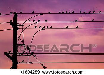 Les Saisons - Page 20 Oiseaux-fil_~k1804289