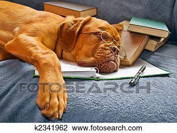 Banco de Imagem - cão, dormir, após,  estudar. fotosearch  - busca de fotos,  imagens e clipart