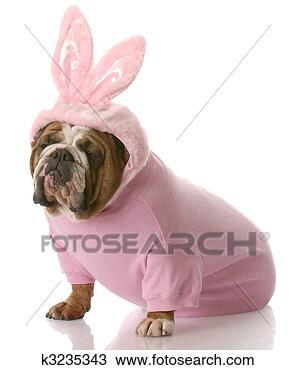 Banco de Imagem - cão, vestido,  cima, páscoa,  coelhinho. fotosearch  - busca de fotos,  imagens e clipart