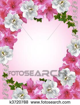 Archivio illustrazioni confine floreale azalee e for Magnolia pianta prezzi