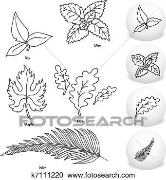 的, 海湾, 枫树, 薄荷, 橡木, 以及, 棕榈叶, 图画, set.图片