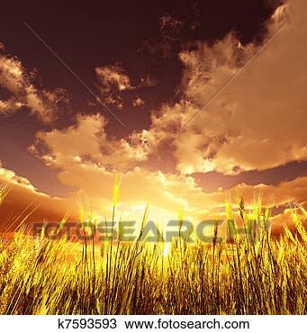 手绘图 - 金色, 小麦地