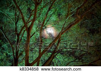 绿色, 月亮, 在, 夜晚