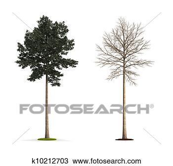 手绘图 - 松树, 树