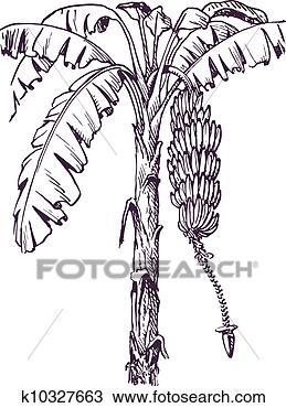 手绘图 - 香蕉树