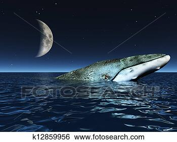 大海中的月亮图片