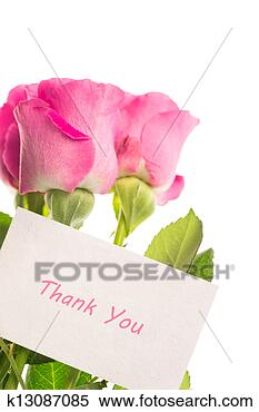 Stock Image - thank you card with pink roses. fotosearch - search stock photos, pictures, wall murals, images, and photo clipart