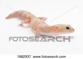 Picture - peach colored<br />