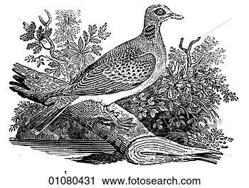 剪贴画 植物群, 动物 群, 线, 艺术, 第19, 世纪, e