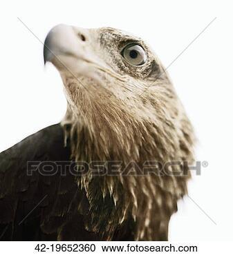 图像一应俱全的图片库/种类激动落泪表情包库-头,a图像,鹰42图片