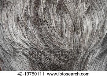摄影图库 - 灰色的头发