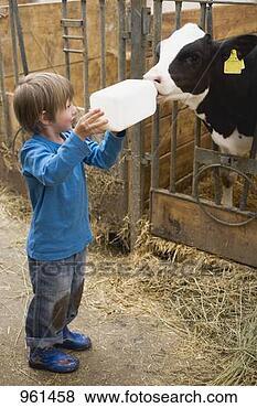 Banco de Imagem - pequeno, menino,  alimentação, bezerro,  leite, garrafa.  fotosearch - busca  de fotos, imagens  e clipart