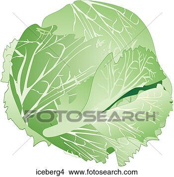 Iceberg Lettuce-One View Large IllustrationIceberg Lettuce Drawing
