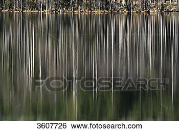 Stock bilder kahl b ume zur ckwerfend in see 3607726 - Kahl gartenbau ...