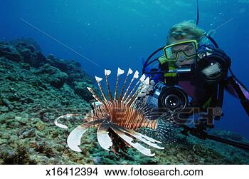 Stock photo of scuba diver with lion fish indonesia for Diving and fishing mural