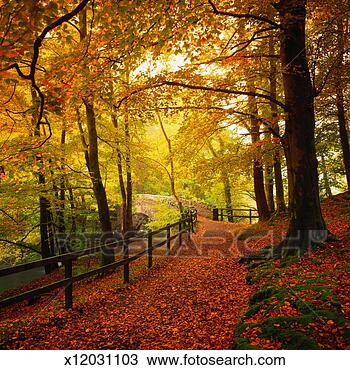 Colección de foto - rastro, por, otoño,  bosque. fotosearch  - buscar fotos  e imágenes y murales  de pared, imágenes  y fotos de clip-art