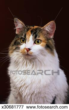 <<:;Rising;:>> A PRP for **(me,Varjack,Mad Moai,and Lan Fan)** Calico-cat_~x30681777