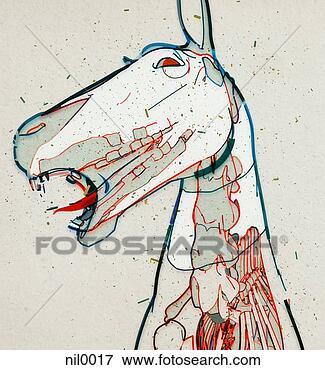 Und knochen fotosearch suche clipart zeichnungen illustrationen