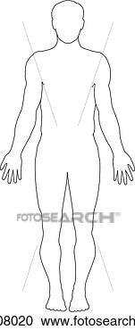 Stock Illustration - anterior view of the major nerves of the body (outline of body). fotosearch - search clipart, illustration, drawings and vector eps graphics images