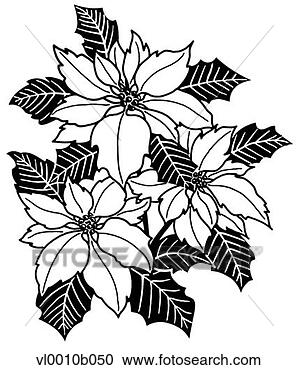poinsettia clipart cartoon