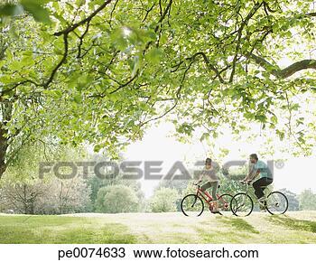 Banco de Imagem - par, montando,  bicycles, embaixo,  árvore. fotosearch  - busca de fotos,  imagens e clipart