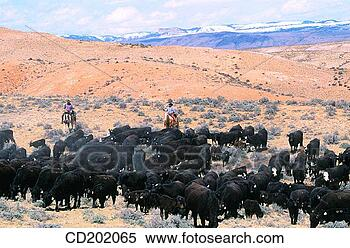 Stock Image - cattle drive utah&lt;br /&gt;&lt;br /&gt;&lt;br /&gt;&lt;br /&gt;&lt;br /&gt;<br /> usa. fotosearch&lt;br /&gt;&lt;br /&gt;&lt;br /&gt;&lt;br /&gt;&lt;br /&gt;<br /> &#8211; search stock&lt;br /&gt;&lt;br /&gt;&lt;br /&gt;&lt;br /&gt;&lt;br /&gt;<br /> photos, pictures,&lt;br /&gt;&lt;br /&gt;&lt;br /&gt;&lt;br /&gt;&lt;br /&gt;<br /> wall murals, images,&lt;br /&gt;&lt;br /&gt;&lt;br /&gt;&lt;br /&gt;&lt;br /&gt;<br /> and photo clipart&#8221; border=&#8221;0&#8243; /></div> </div> </td> </tr> </tbody> </table> 					</div><!-- .entry-content -->  		<footer class=