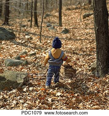 Stock Photograph - view from behind a young child carrying a basket of pine cones. fotosearch - search stock photos, pictures, images, and photo clipart