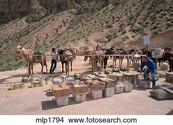 Stock Photo of Mail and supplies carried by mule train to ...