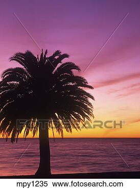 banque d 39 image silhouetted palmier levers de soleil. Black Bedroom Furniture Sets. Home Design Ideas