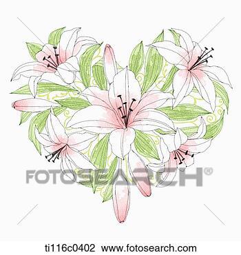 剪贴画 - 百合花, 构成