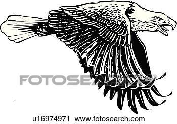 Clipart illustration lineart animal oiseau aigle mouche voler u16974971 recherchez des - Oiseau mouche dessin ...