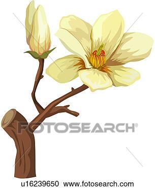 Clipart fragrante vita pianta primo piano fiore for Magnolia pianta prezzi