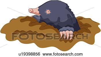 Clip art animale selvaggio vertebrato talpa terra for La talpa animale