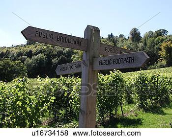 照片 - 英语, 葡萄园 u16734158 - 搜寻相片及影