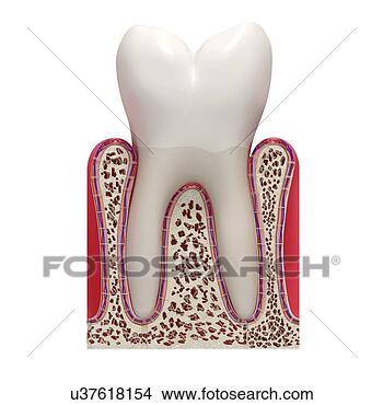 绘画/画画 - 健康, 牙齿