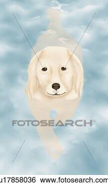 Stock illustratie gouden retriever zwemmen in poel de hoge mening van de hoek u17858036 - Poel van blanco hoek ...
