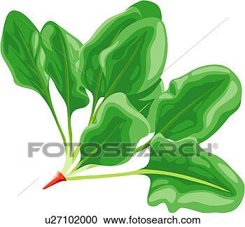 Κουζίνα, λαχανικό, τροφή, spinage, σπανάκι