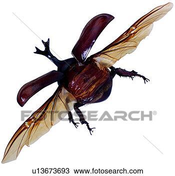 昆虫, 昆虫, 节肢动物