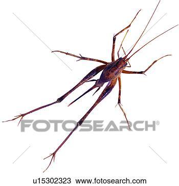 昆虫, 节肢动物