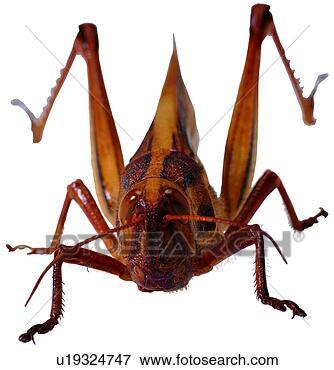 节肢动物的昆虫类有什么特点?