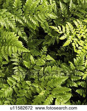 rainforest leaf stencils for childrendesert leaf templates ...
