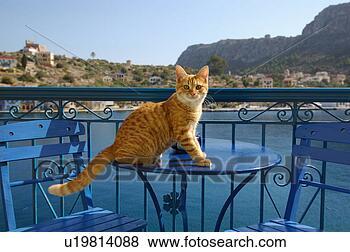 Banco de Imagem - gato, sentando,  café, tabela.  fotosearch - busca  de fotos, imagens  e clipart
