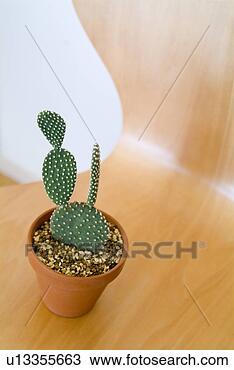 盆, 仙人掌, 植物, 椅子 u13355663 搜寻图库图像及美工图案 u