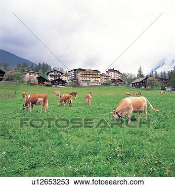 Banco de Imagem - árvore, montanha,  vaca, casa, campo,  paisagem, natural.  fotosearch - busca  de fotos, imagens  e clipart