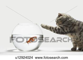 Sigue la imagen según la palabra - Página 4 Gato-atacar-pez_~u12924024